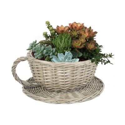Teacup Planter with Saucer in Willow