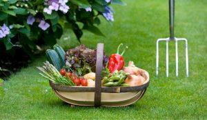 What is a Garden Trug?